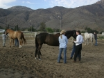 Students learn hands-on work to help their horses move easier