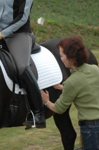 Mary helps the horse feel how his ribs can move with his rider in the saddle
