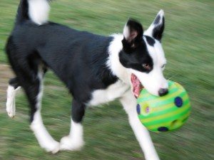 Emma went from hip dysplasia to healthy hips!
