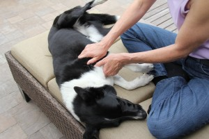 Learn hands-on ways to help your dog.